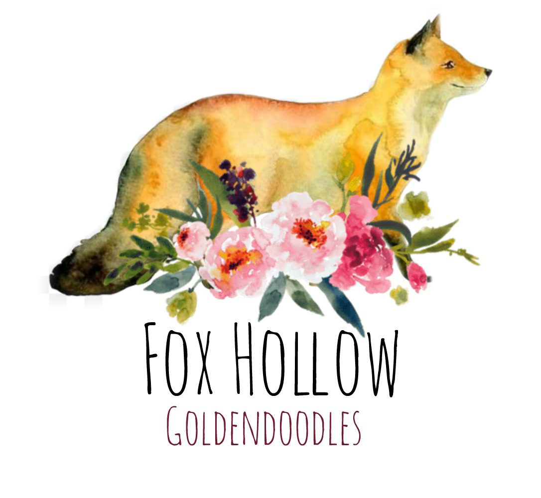 Fox Hollow Goldendoodles
